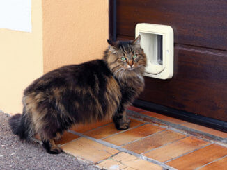 Katze vor der Katzentür