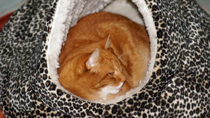 Kuschelhöhle für die Katze