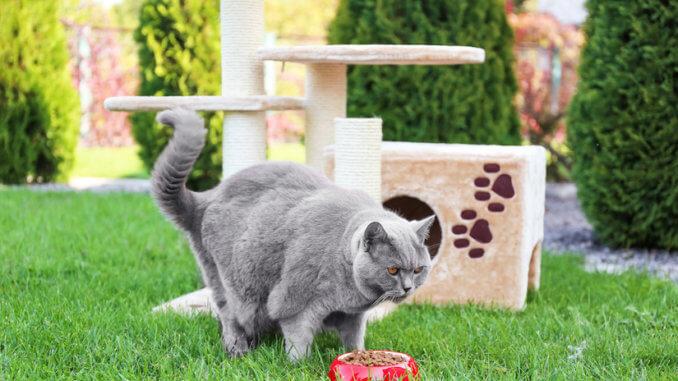 Outdoor Kratzbaum für die Katze