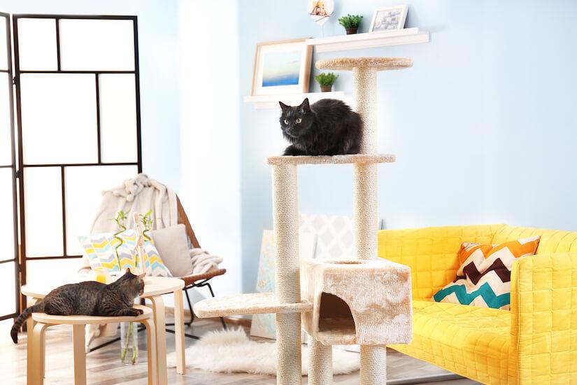 Zwei Katzen auf einem Kratzbaum für große Katzen