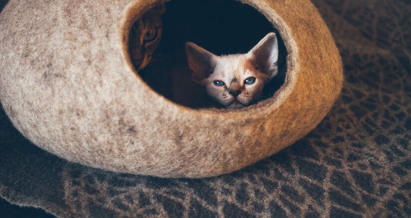 Zwei Katzen in einer Katzenhöhle Filz