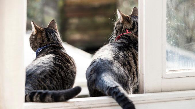 Zwei Katzen wünschen sich eine Katzenklappe im Fenster