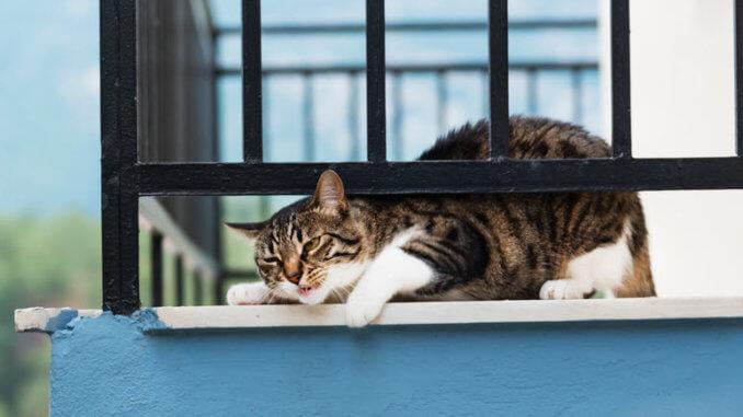 Diesen Balkon sollte man katzensicher gestalten
