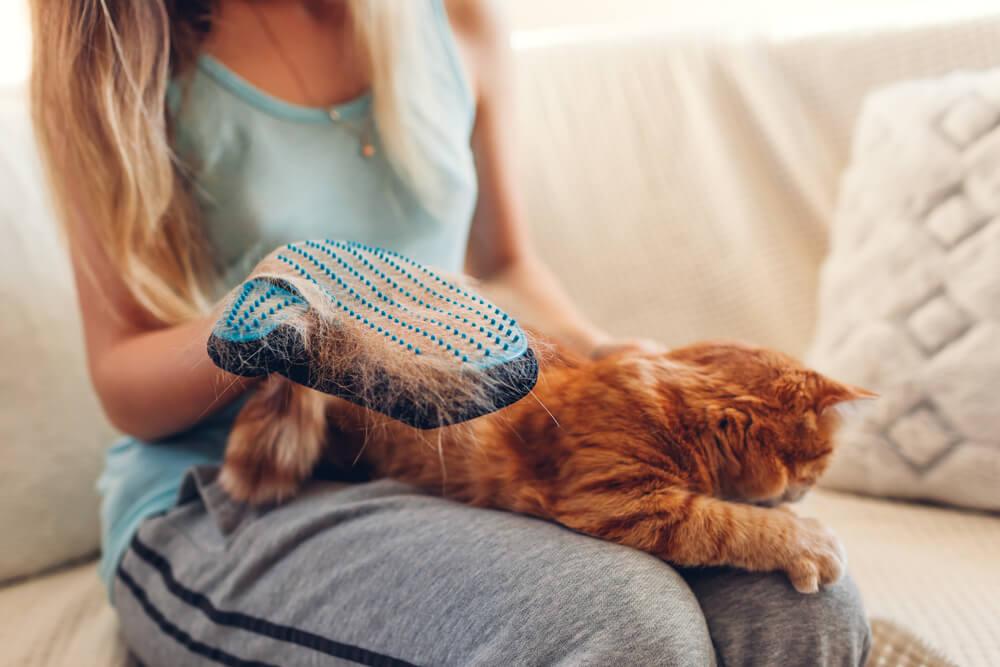 Katzenfell mit Katzenhandschuh bürsten