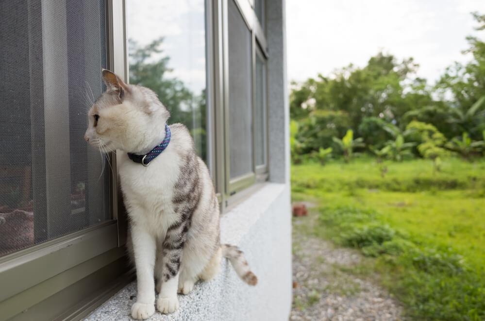 Freigänger Katze auf Fenstersims