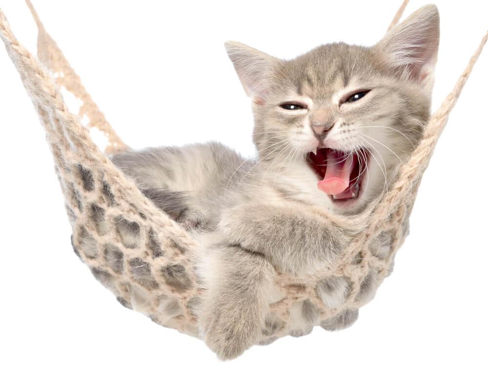 Hängematte als Katzenschaukel