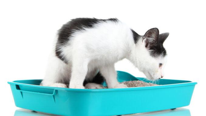 Katze frisst Katzenstreu