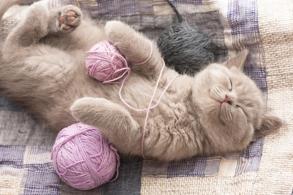 Katze gurrt im Schlaf
