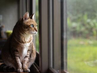 Der Fensterschutz sichert die Katze