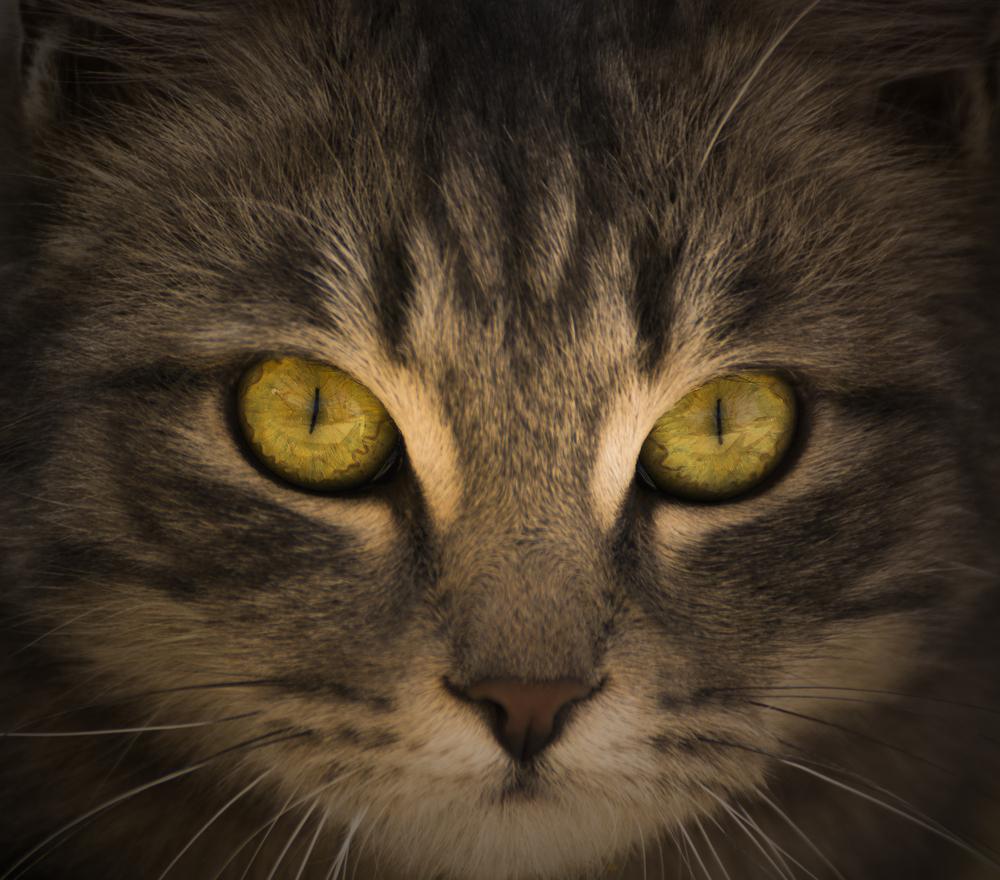 Auch Nachts können Katzen gut sehen