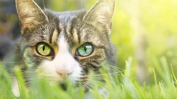 Katzen können tagsüber auch Farben sehen