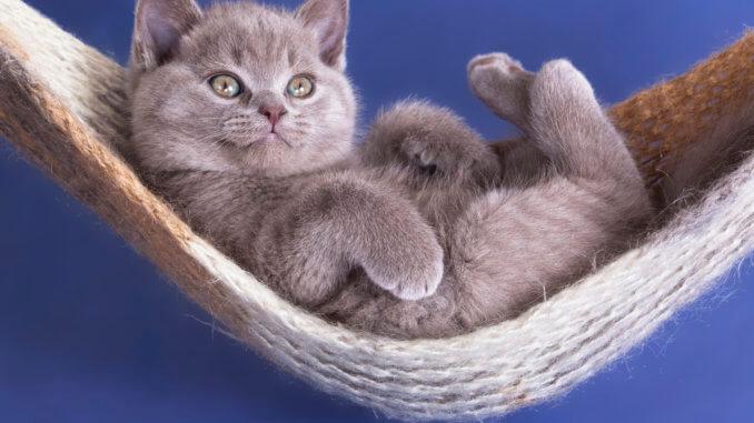 Katzenschaukel