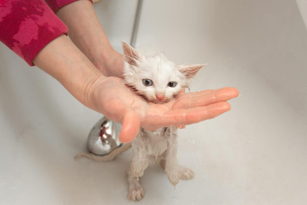 Katzenshampoo wird ausgespült