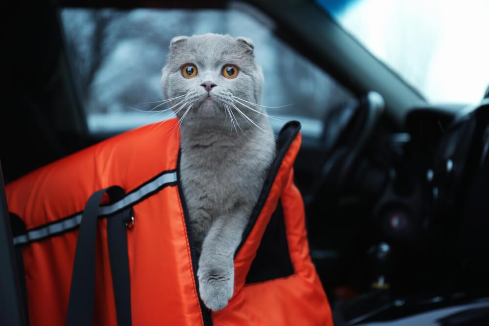 Katzentransporttasche im Auto