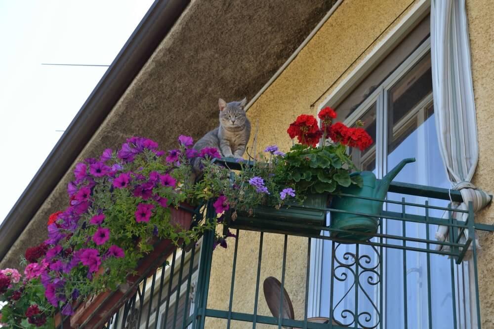 Kein katzensicherer Balkon