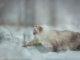 Neva Masquarade
