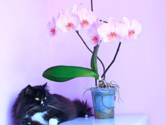 Katze neben einer giftigen Orchidee