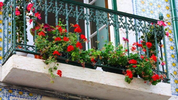 Balkon ohne Katzenwendeltreppe