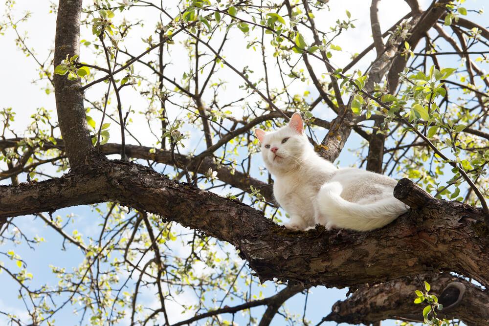 Freigänger Katze klettert