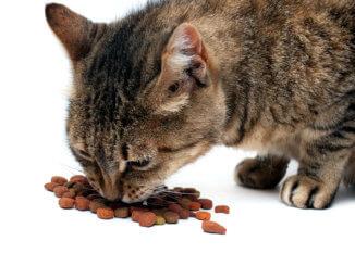 Katze frisst Trockenfutter