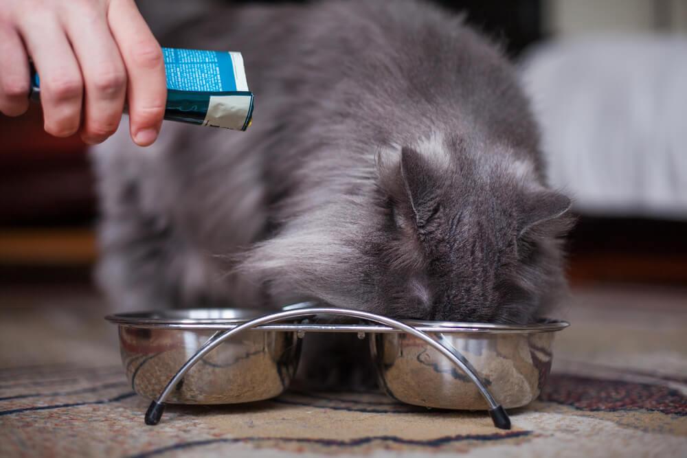 Katze bekommt Medikament ins Futter