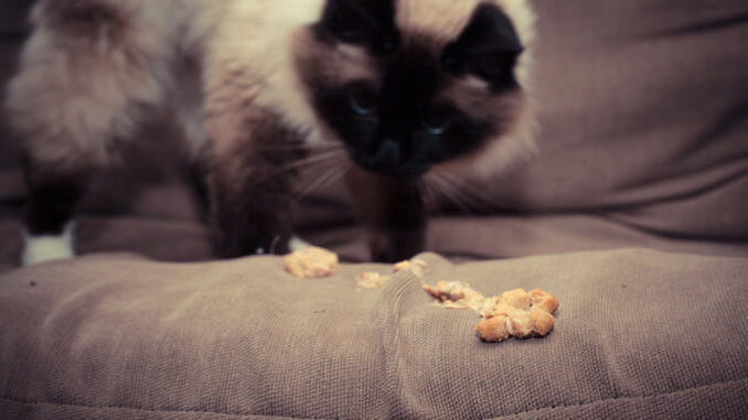 Katze übergibt sich