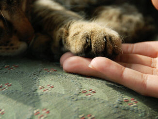 Katze einschläfern