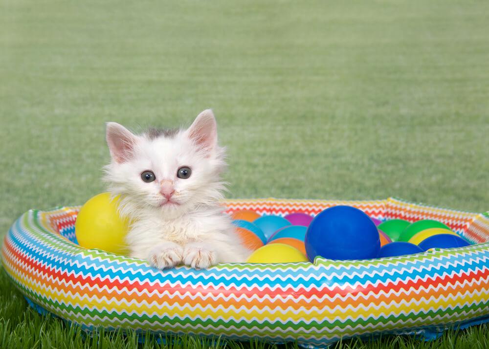 Katze im aufblasbaren Katzenpool
