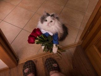 Katze kratzt an der Tür