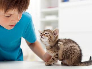 Katze mit Flöhen bekommt Spot On