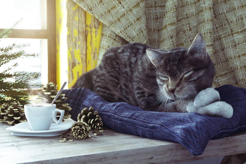 Katze mit Katzenkissen auf Fensterbank