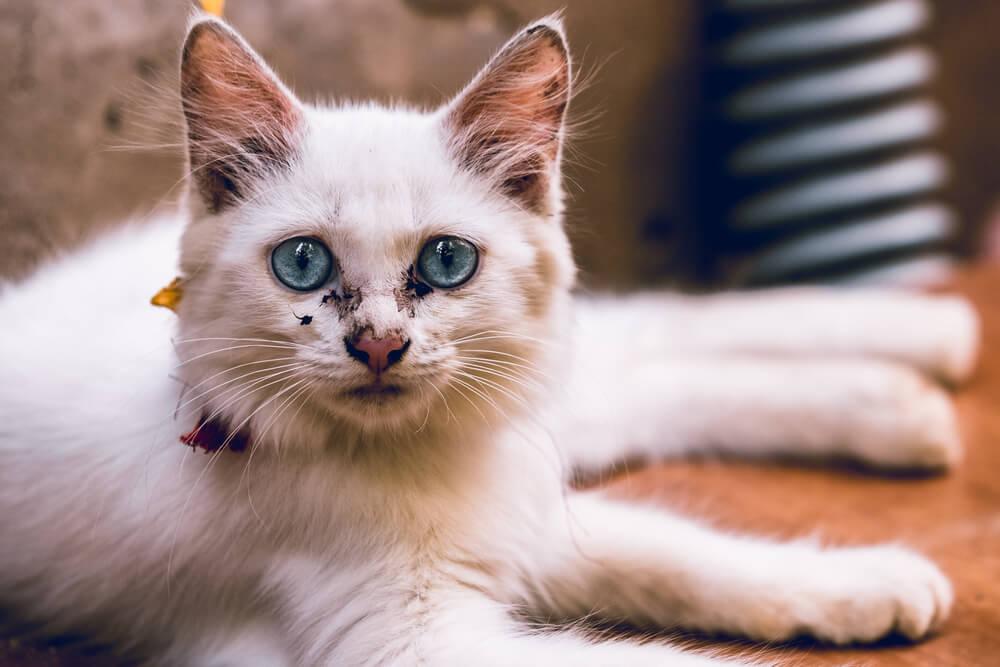Katze mit Tränenspuren am Auge