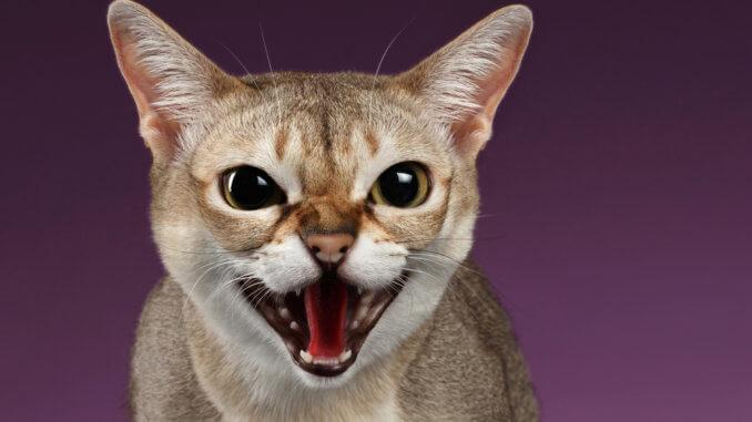 Katze mit Zahnfleischentzündung