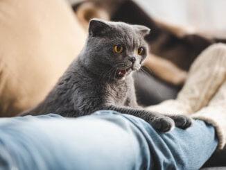 Katze würgt