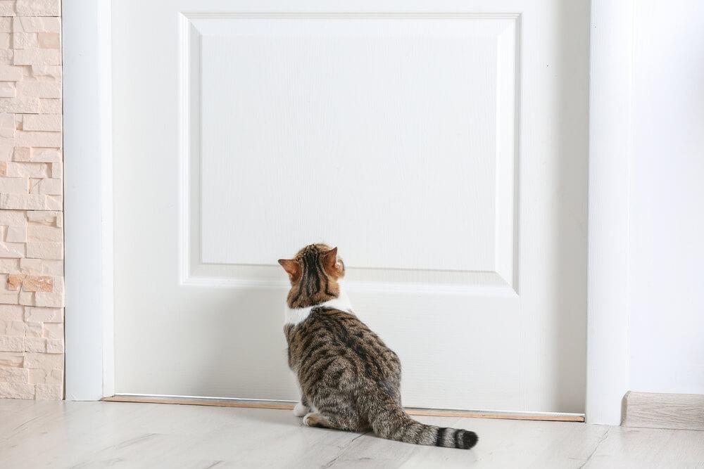 Katze wartet vor der Tür