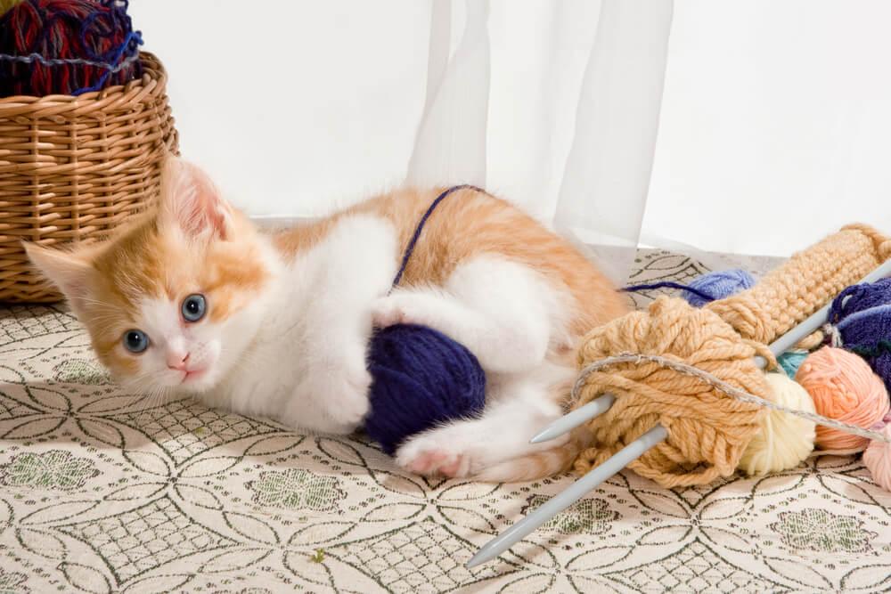Katzenbaby spielt mit Wolle