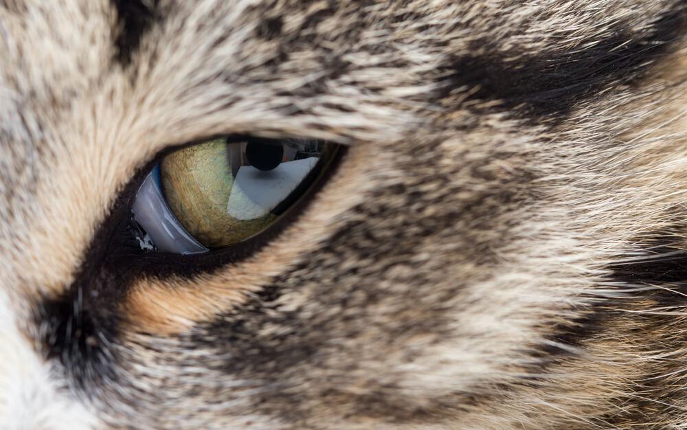 Nahaufnahme eines Katzenzauges