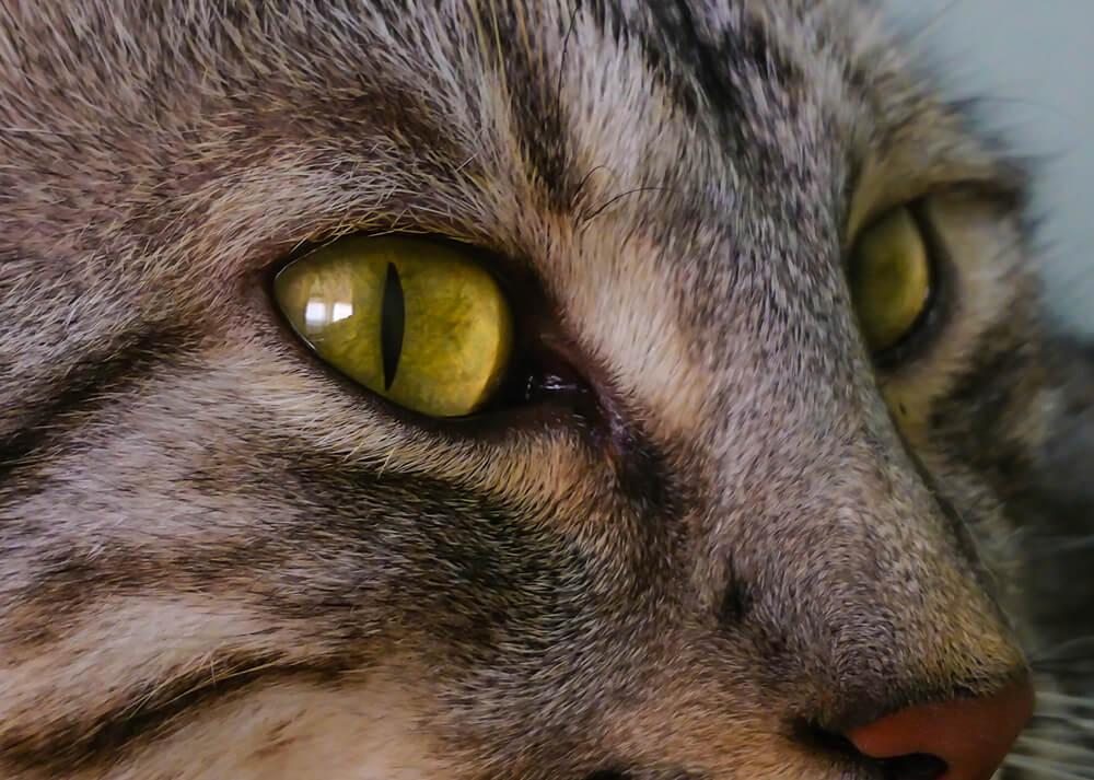 Die schmalen Katzenpupillen faszinieren
