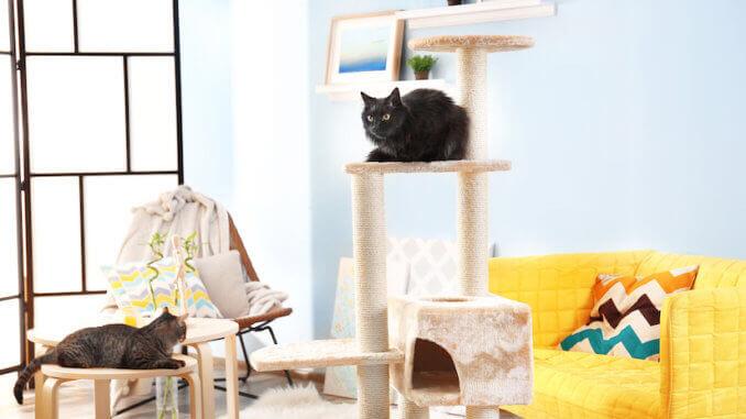 Zwei Katzen auf einem Kratzbaum aus Holz