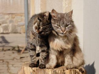 Zwei Katzen im Katzengehege