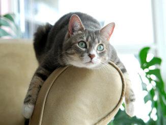 entspannte Katze sabbert