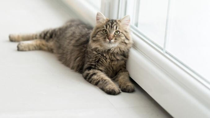 Eine ausgewachsene Katze ist nicht zwingend erwachsen