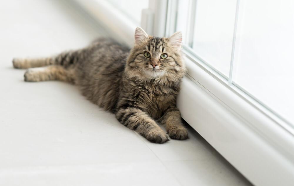 Gewichtsverlust bei erwachsenen Katzen