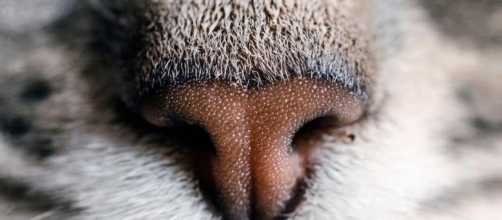 Katzennasen mögen nicht jeden Geruch