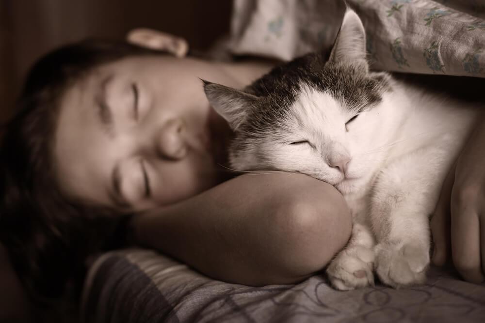 Katze schläft ruhig mit ihrem Besitzer
