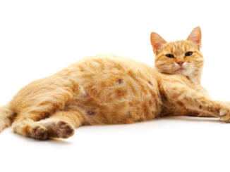Schwangere Katze trägt im Mittel 65 Tage