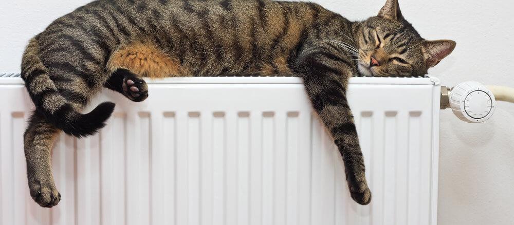 Tiefenentspannte Katze ohne Beruhigungsmittel