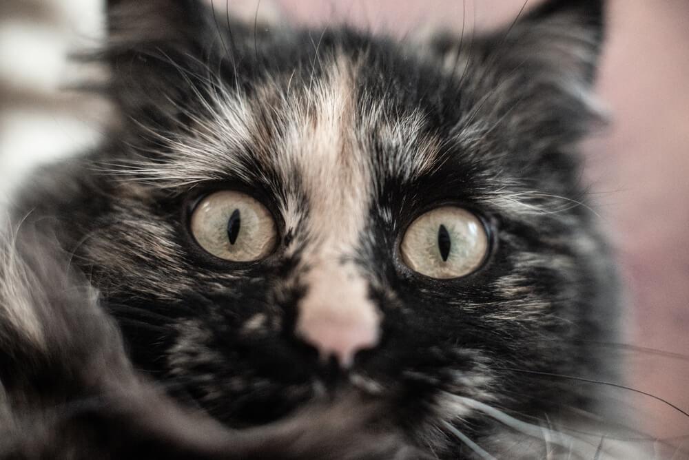 Katze mag Geruch nicht