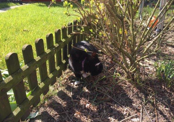 Weenect Cats 2 im Praxistest 6